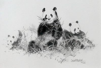Panda (Pencil)