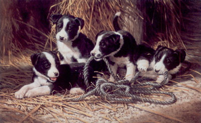 Playtime - Border Collie Puppies small