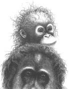 Plea For The Rainforest - Orangutans by Gary Hodges