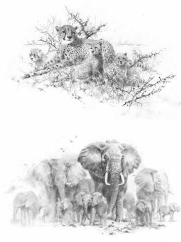 portfolio-set-i-cheetahs-elephants-set-of-2-5023
