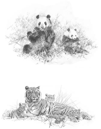 portfolio-set-ii-pandas-tigers-set-of-2-5566