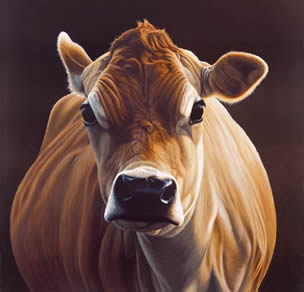 Posh - Cow by Paul James