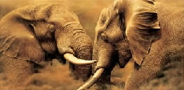 Power Play - Elephants