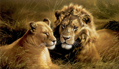 Pride Of Africa - Lion & Lioness
