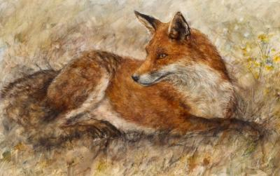 red-fox-waiting-18370