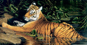 Reflections Of India - Tiger small