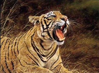 Roar Of The Jungle - Tiger by Alan Hunt