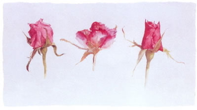 Rose Bud Trio