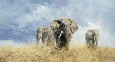 savuti-elephants-7670