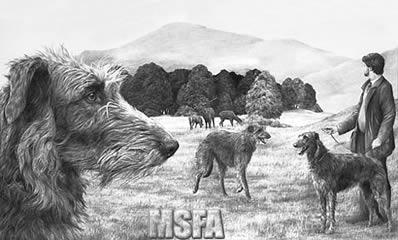 scottish-deerhound-3933