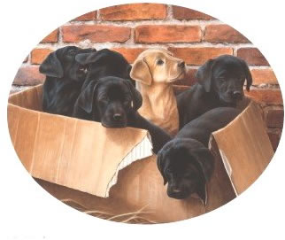 Six Pack - large by Nigel Hemming