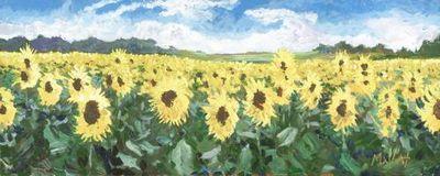 sunflower-sanctuary-14721