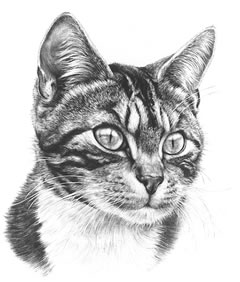 Tabby Cat small