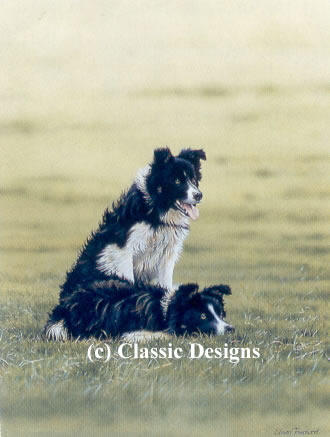 teamwork-border-collies-7234