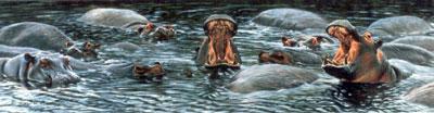 The Big Yawn - Hippos by Alan Hunt
