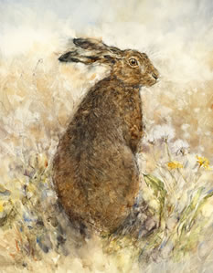 The Curious Hare by Gary Benfield