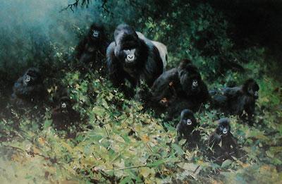 The Mountain Gorillas Rwanda - Gorilla