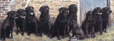 The New Recruit - Black Labradors by Nigel Hemming