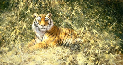 the-ranthambore-tiger-7286