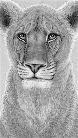 The Spirit Of Elsa - Lioness by Gary Hodges