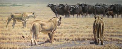 The Standoff  - Lionesses (Canvas)