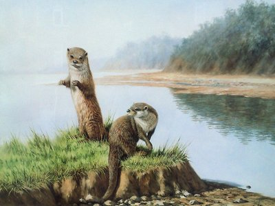 Two Otters