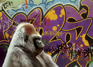 Urban Gorilla by Paul James