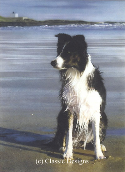 Waiting For Stan (Border Collie) - Canvas