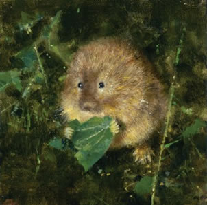 Water Vole small