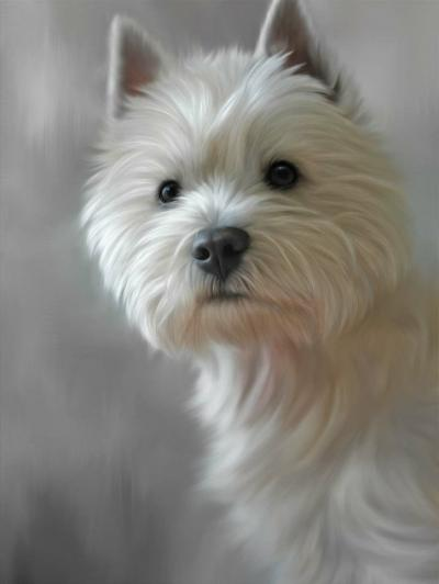West Highland Terrier (40th Anniversary Image) by Nigel Hemming