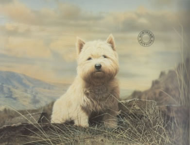 Westie by George Pickering