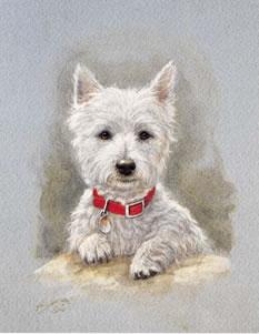 Westie Pup Study by John Silver