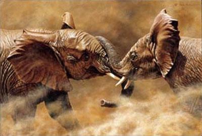 Who Are You Shoving? - Elephants