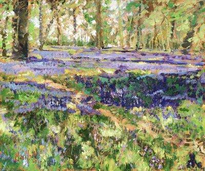 woodland-walk-11986