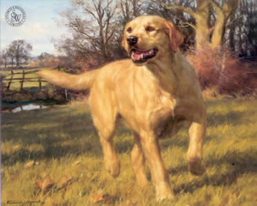 Yellow Labrador by Frederick J Haycock
