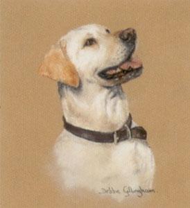 Yellow Labrador Study