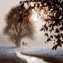 A World of Dreams by John Waterhouse