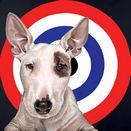 Bulls Eye by Hayley Goodhead