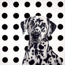 Spot The Dog - Canvas by Hayley Goodhead