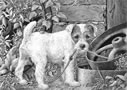 What? (Parson Russell Terrier) by Mike Sibley