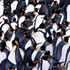 Penguins In The Crowd by Nicola Read